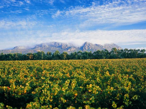 Romantic Winelands Self-Drive