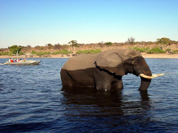 Affordable Zambezi & Chobe Safari