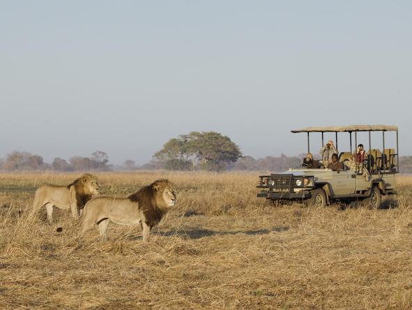 Busanga Bush Camp - game drive with lions