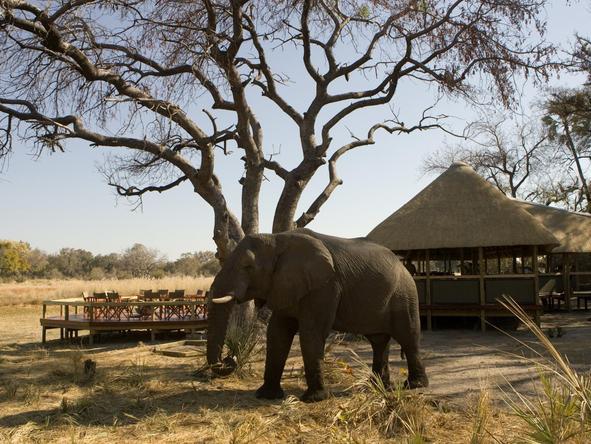 Chitabe Lediba - elephant