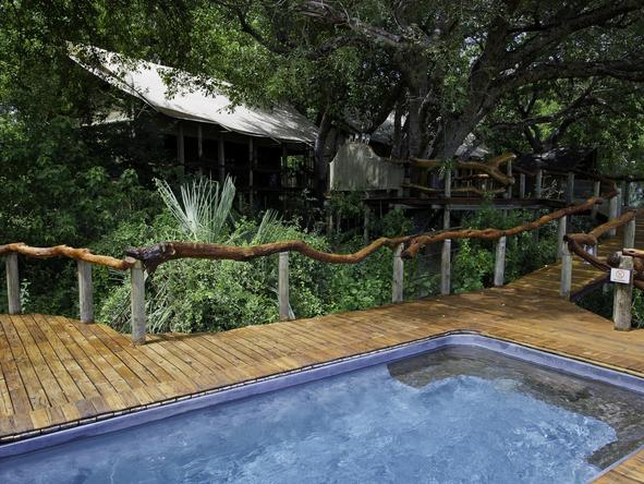 Tubu Tree Camp - pool