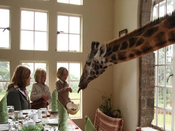 The Giraffe Manor - Interact with the Giraffes, right from the breakfast table.