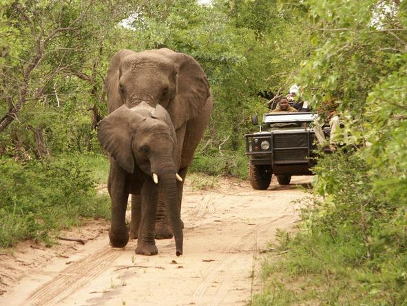 Shumbalala Lodge - elephant