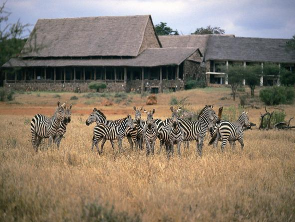 Kilaguni Serena Safari Lodge - zebra