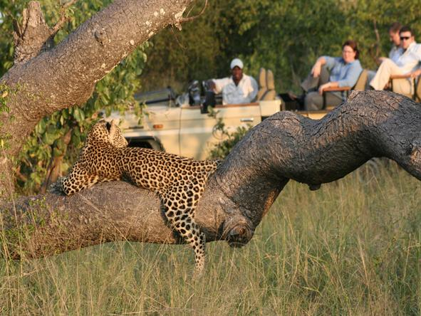 Tintswalo Safari Lodge - game drive with leopard