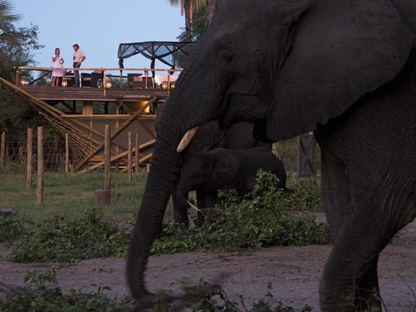 Abu Camp - deck + elephants