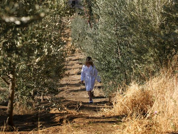 Olive Grove - olive plantation walk
