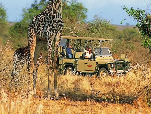 Amboseli Porini Camp - giraffe