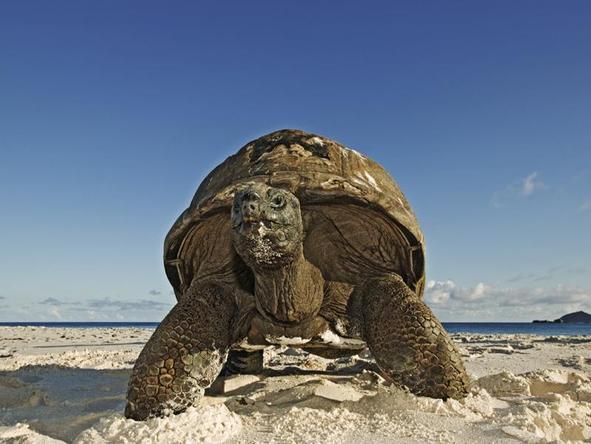 Cousine Island Hideaway - turtle