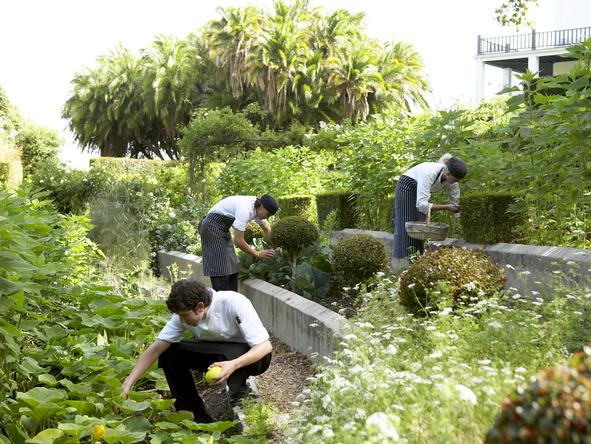 Cellars-Hohenort - Garden