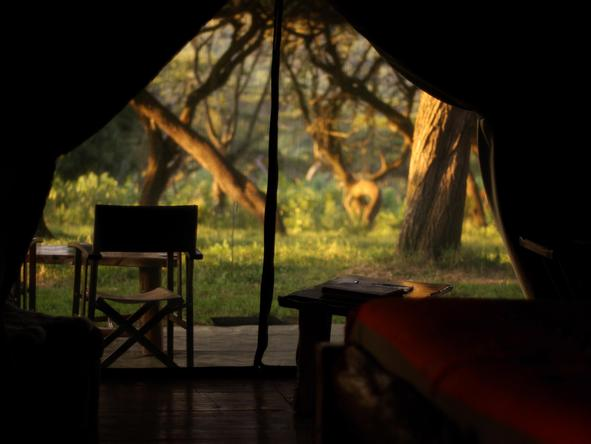 Lemala Ngorongoro - view from tent