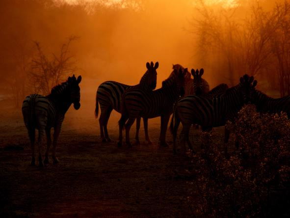 Leroo La Tau  - zebras at sunset