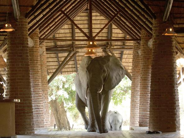 Mfuwe Lodge - elephant at entrance