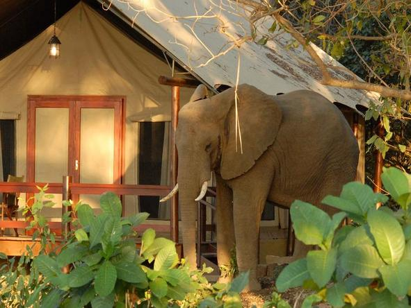 Lugenda Wilderness Camp - elephant next to camp