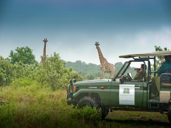 Makakatana Bay Lodge - giraffe