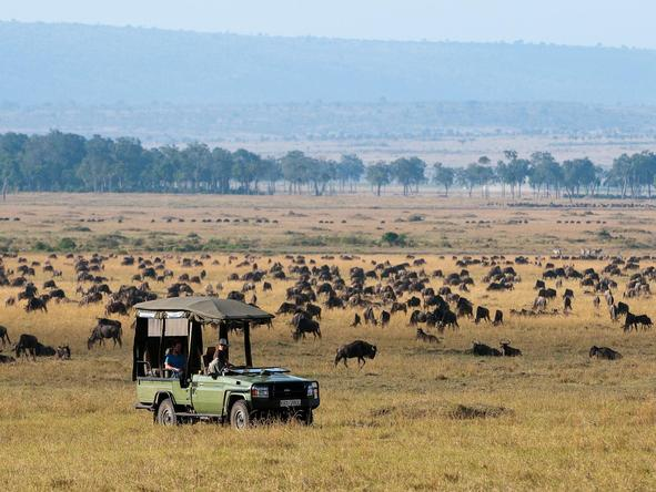 Mara Plains - game drive