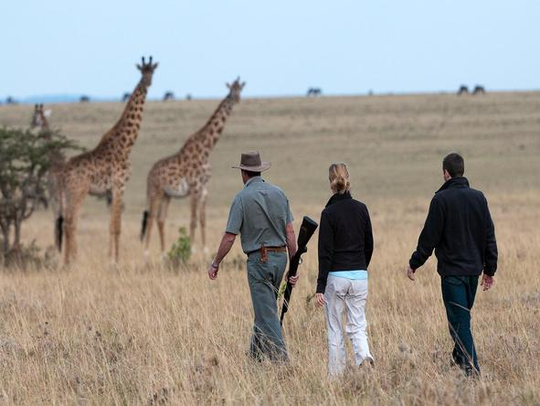 Mara Plains - guests with giraffes