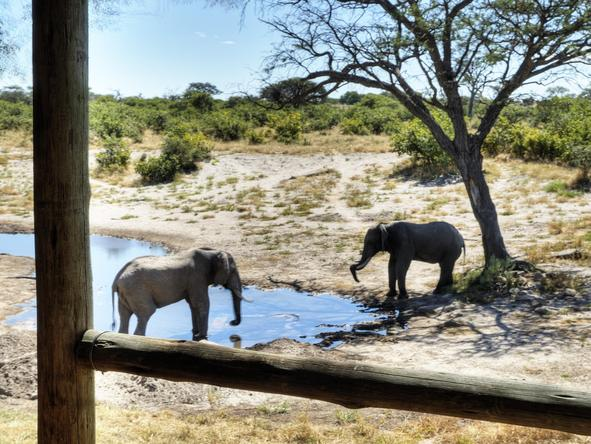 Savute Safari Lodge - deck with view of elephants