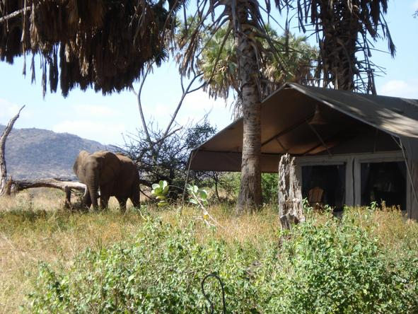 Elephant Bedroom Camp - Wild visiter