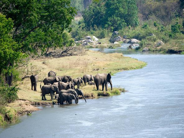 Mkulumadzi - Wildlife