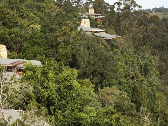 Tsala Treetop Lodge - Setting