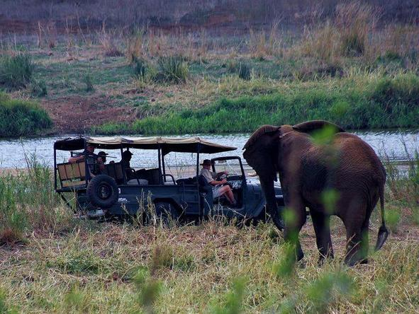White Elephant Game Lodge - Game Drive