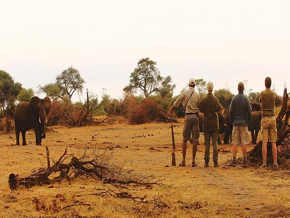 Kanga Bush Camp - Activities
