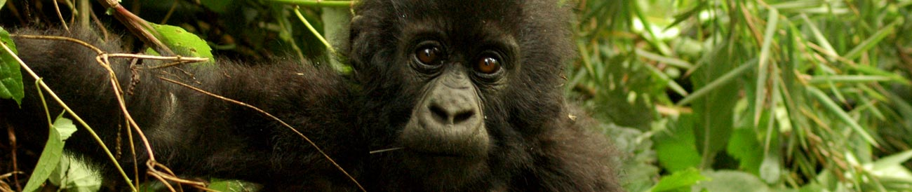 Amazing Rwanda Gorilla Adventure