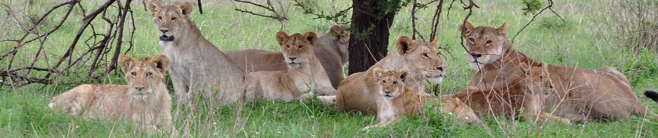 Affordable Tanzania Kifaru Safari
