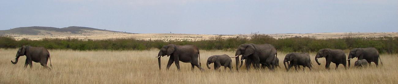 Classic Kenya & Tanzania Explorer