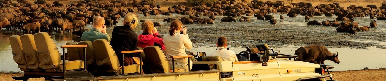 Ultimate Kruger Park Family Safari