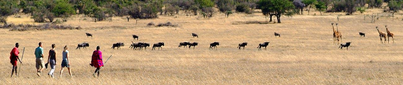 Masai Mara - home to the annual wildebeest migration, the Masai Mara also offers spectacular year-round game viewing.