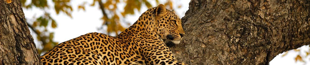 Kruger - South Africa's top Big 5 destination offers incredible safari experiences in its private reserves and concessions.