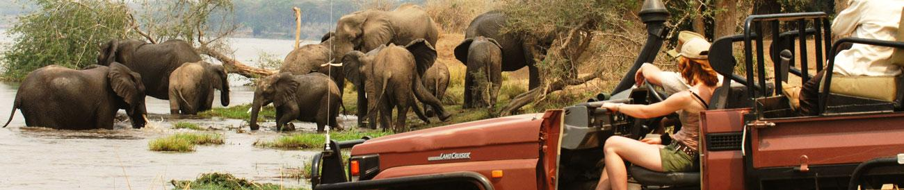 Africa Safari Guide - know where to go when, plus travel tips and advice for any African safari vacation.