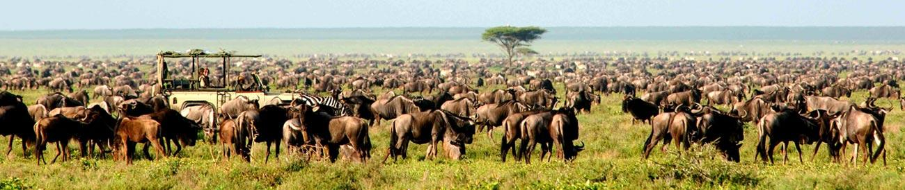 Serengeti - this year-round safari destination is also home to the annual wildebeest migration - one of Nature's greatest spectacles.