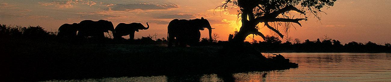 Best of Botswana Fly-in Safari