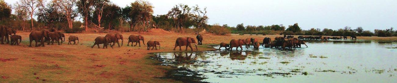 Linyanti - visit the pristine Linyanti wetlands for great game viewing, all the predators, amazing birding and huge dry-season elephant herds.