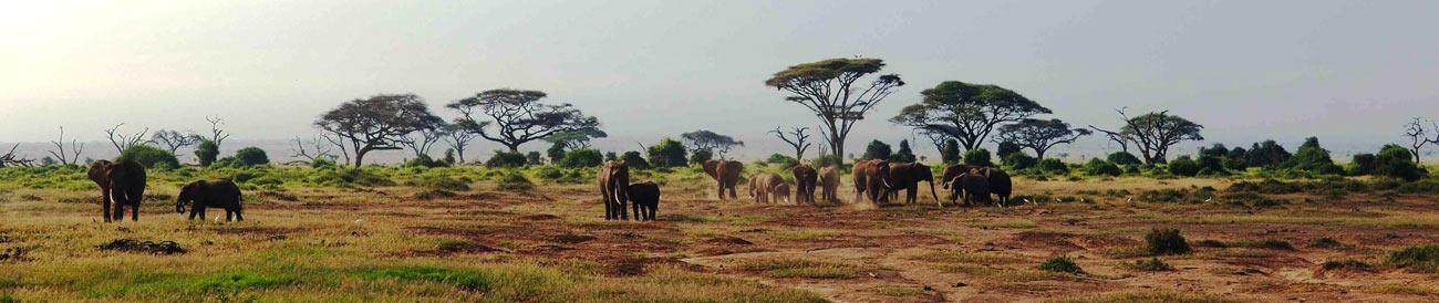 Amboseli National Park - apart from offering excellent game viewing, Amboseli also has the best views of iconic Mount Kilimanjaro.