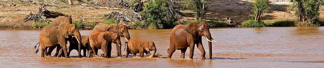 Tsavo National Park - famous for its huge dry-season elephant herds, Kenya's biggest park combines well with a beach holiday on the Indian Ocean coast.