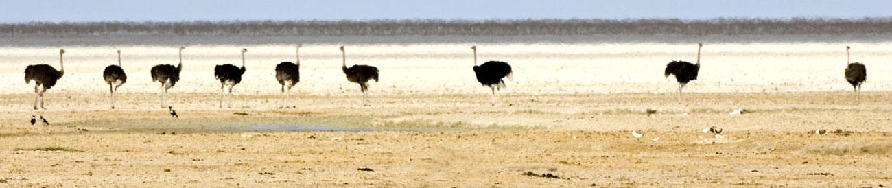 Etosha National Park - one of Southern Africa&#39;s best wildlife destinations, Etosha is home to vast herds of elephant as well as lion, cheetah, rhino and a great mix of savannah and desert animals.