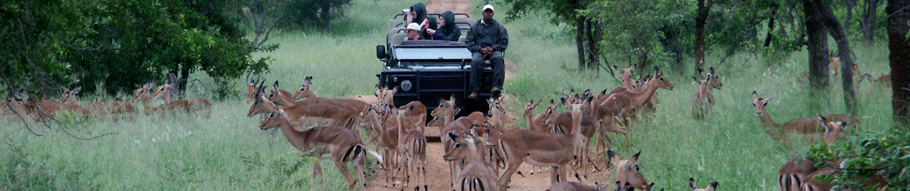 Winelands and Kruger in Luxury
