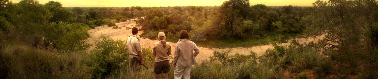 Timbavati - this famous private reserve is set next to the Kruger Park and is best known for its population of white lions.