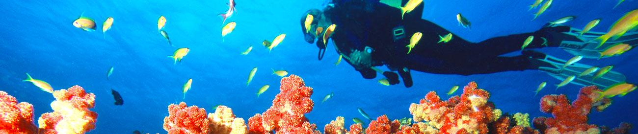 Diving Holidays - experience some of the best dive sites in the Indian Ocean: Zanzibar, the Seychelles, Mauritius and the Mozambique islands.