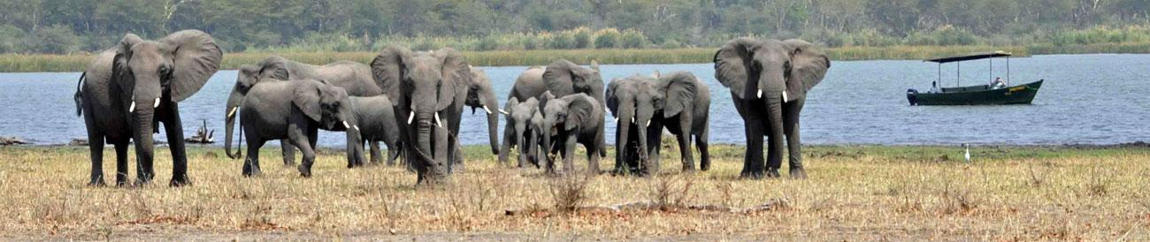 Liwonde National Park - home to large herds of elephants, Malawi&#39;s best game reserve is easily combined with a beach holiday on nearby Lake Malawi.