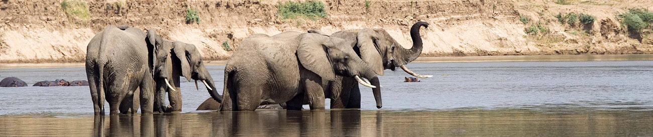 South Luangwa National Park - home to Africa's best guided walking safaris, the South Luangwa's dry-season game viewing ranks as some of the best on the continent.