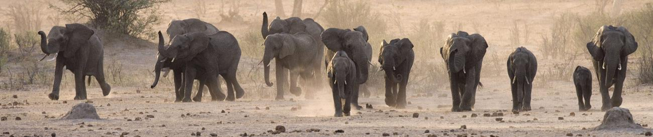 Hwange National Park - this is Zimbabwe's flagship safari destination, home to huge elephant herds and a true sense of the African wilderness.