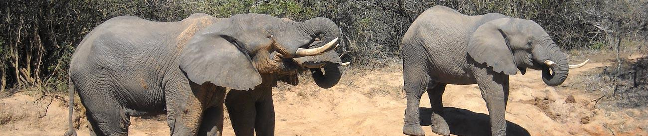 Addo Elephant National Park - this malaria-free park in the Eastern Cape is ideal for families and is home to a large elephant population.