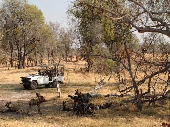 Camp Moremi - game drive
