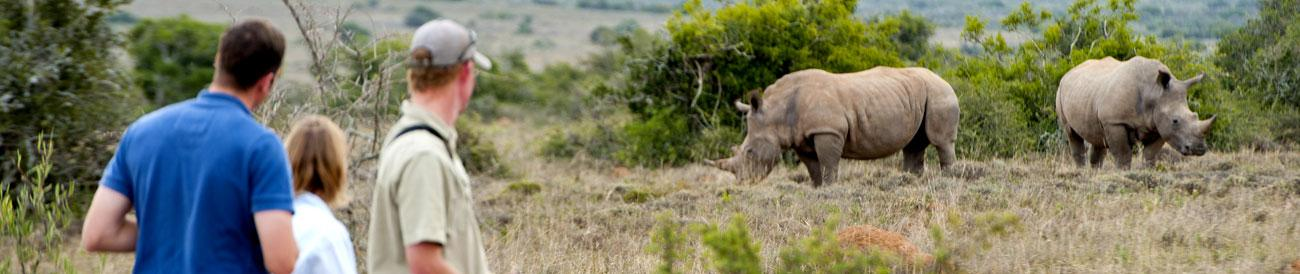 Malaria-free Safaris - perfect for families, a safari in one of South Africa&#39;s top malaria-free reserves means all the thrills of superb game viewing but none of the worries.