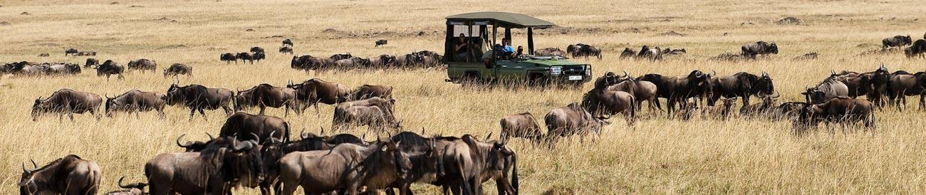 Migration Safaris - get front row seats to the incomparable wildebeest migration in the Serengeti and Masai Mara, one of Africa's greatest wildlife spectacles.